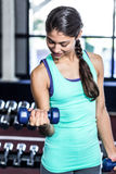 Fit woman exercising with dumbbells Royalty Free Stock Photography