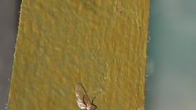 Fita adesiva da armadilha do inseto da mosca vídeos de arquivo