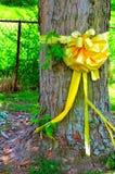 Fita amarela amarrada em torno de uma árvore de bordo Imagem de Stock Royalty Free