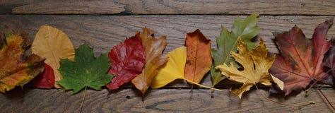 Fita das folhas de outono coloridas na madeira Fotografia de Stock