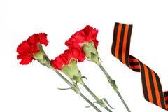 Fita de St George e cravos do 9 de maio vida vermelha ainda Símbolos da vitória na grande guerra patriótica Isolado no branco Fotos de Stock Royalty Free