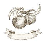 Fita retro dos pêssegos do fruto Fotografia de Stock
