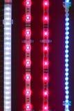 Fitas conduzidas da luz Imagens de Stock