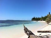 Fitchi hermoso de la playa Imagen de archivo