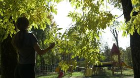 Fitness beautiful female model admiring tree leaves and enjoying the autumn sunny bright light in park in slow motion -. Fitness beautiful female model admiring stock video