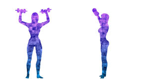 Fitness collection. 23 loop animations. Alpha channel. Alpha matte. 4K. stock video footage