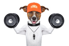 Fitness dog Stock Photo