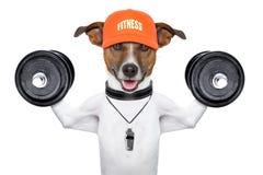 Fitness dog Stock Photo