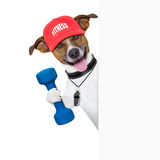 Fitness dog  banner. Personal  trainer dog with dumbbell and banner Stock Photos