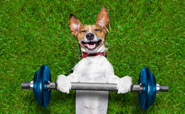 Fitness dog Stock Photos