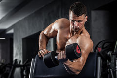 Fitness with dumbbells stock images