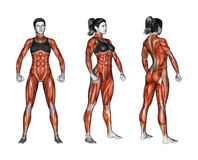 Fitness exercising. Projection of the human body. Female