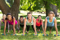 Fitness group planking in park. On a sunny day royalty free stock photos