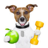 Fitness and healthy dog Royalty Free Stock Photography