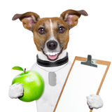 Fitness and healthy dog Stock Image