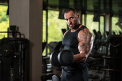 Fitness Muscle Man Exercise Biceps With Dumbbells Royalty Free Stock Images