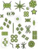 FITOPLANKTON - ZIELONE algi - CHLOROPHYTA zdjęcia stock