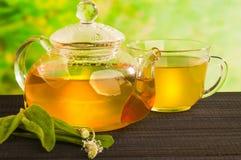 Fitoterapia, chá com lanceolata do Plantago Fotografia de Stock