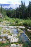Fiume - Alberta - Canada fotografia stock