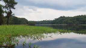Fiume alla foresta pluviale in Amazonas, Brasile Fotografie Stock Libere da Diritti