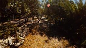 Fiume artificiale nel nuovo parco nel Nord di Alanya nel sud della Turchia stock footage