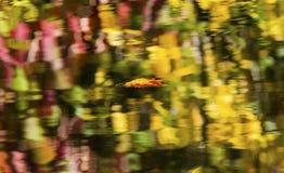 Fiume astratto di galleggiamento Washington di Wenatchee di riflessione della foglia Immagini Stock