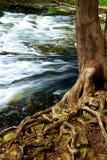 Fiume attraverso il legno fotografia stock libera da diritti