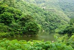 Fiume attraverso la foresta selvaggia Fotografie Stock