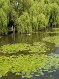 Fiume Avon Stratford su avon Fotografia Stock