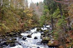 Fiume Braan che passa la foresta dell'eremo, Scozia Immagine Stock Libera da Diritti