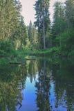 fiume calmo con le riflessioni degli alberi in acqua in fogliame verde intenso di estate in foresta vicino a Cesis, Lettonia  immagini stock