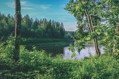 fiume calmo con le riflessioni degli alberi in acqua in fogliame verde intenso di estate in foresta vicino a Cesis, Lettonia  fotografia stock