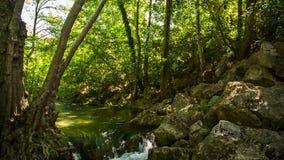 Fiume calmo della montagna che entra nella foresta verde archivi video
