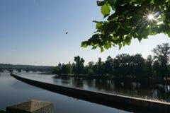 Fiume calmo sotto il sole di mattina Chiarore di Sun attraverso il fogliame verde degli alberi L'uccello sorvola l'acqua immagini stock libere da diritti