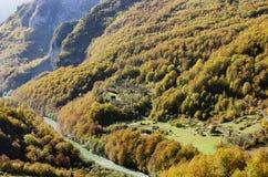 Fiume Cesalpina della montagna e foresta immagini stock libere da diritti
