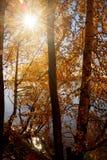 Fiume con Autumn Trees Immagini Stock