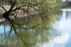 Fiume con flusso lento degli alberi verdi fotografia stock libera da diritti