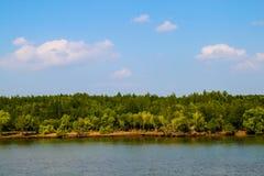 Fiume con gli alberi ed il cielo blu della mangrovia immagini stock