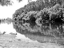 Fiume con gli alberi su in bianco e nero Fotografie Stock