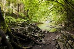 Fiume con le rocce in foresta. Fotografie Stock