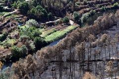 Fiume contro l'incendio violento nella zona rurale Fotografia Stock Libera da Diritti