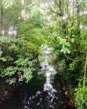 Fiume/corrente sotto gli alberi Fotografia Stock