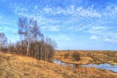 Fiume della betulla in molla in anticipo sotto un cielo blu Immagine Stock