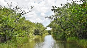 Fiume della fauna selvatica del parco dell'alligatore dei terreni paludosi degli S.U.A. dello stato di Florida Immagini Stock Libere da Diritti