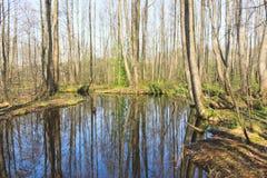 Fiume della foresta Fotografie Stock Libere da Diritti