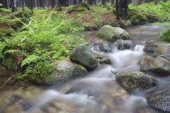 Fiume della foresta Fotografie Stock