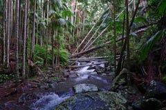 Fiume della foresta, Australia Fotografia Stock Libera da Diritti
