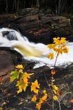 Fiume della foresta nella caduta Fotografia Stock