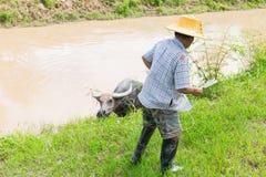 Fiume della forma del bufalo di tirata dell'agricoltore in campagna della Tailandia Immagini Stock