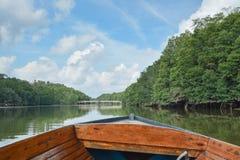 Fiume della giungla, Brunei immagini stock libere da diritti